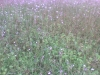 ekologisk-hampa